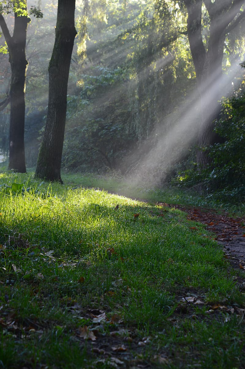 Green grass and trees with sun rays