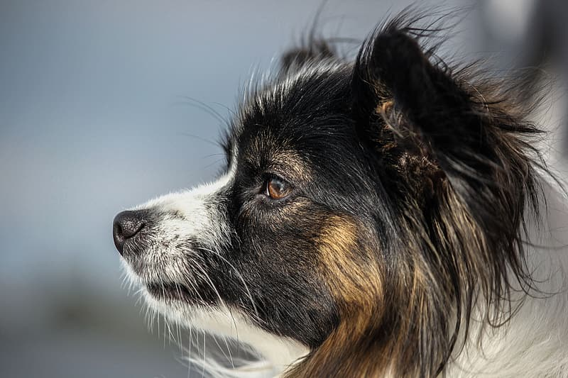 Close-up photography of black and white dog