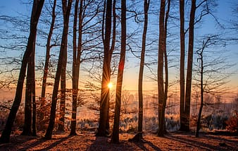 Forest tree with a background of sun rise
