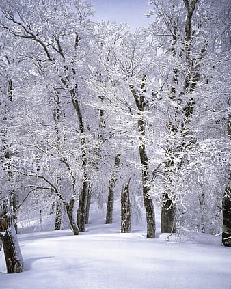 Brown tree covered with white snow