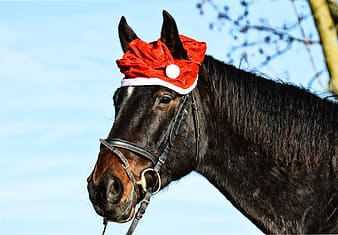 Black horse with red rose on head