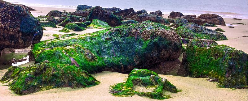 Stone fragments with moss on beach shore during daytime