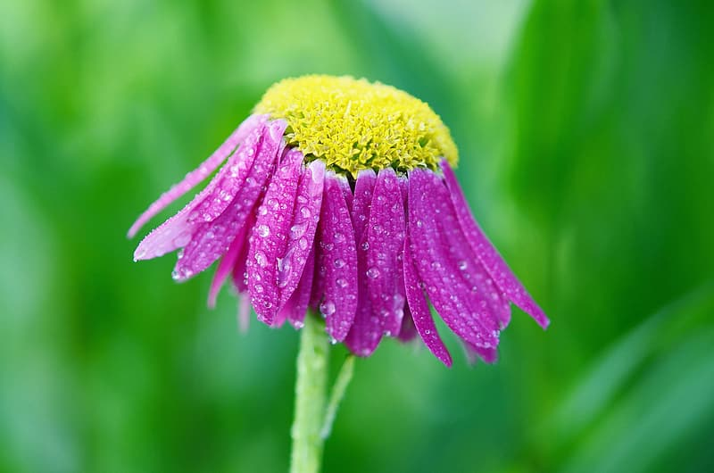 Photography of yellow and purple flower