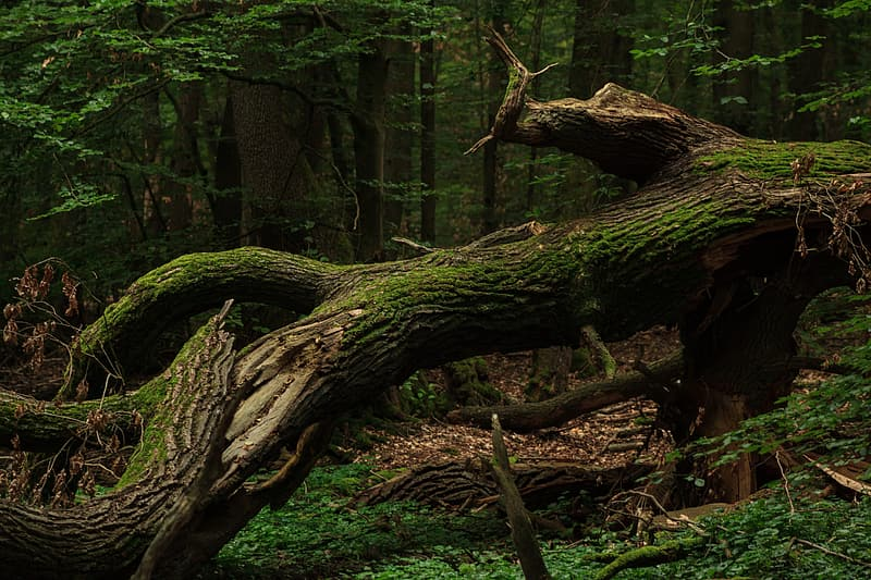 Brown tree trunk with green leaves