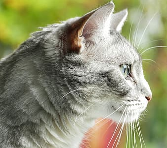 Side view of cat