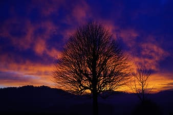 Silhouette photograph of bare tree during sunset