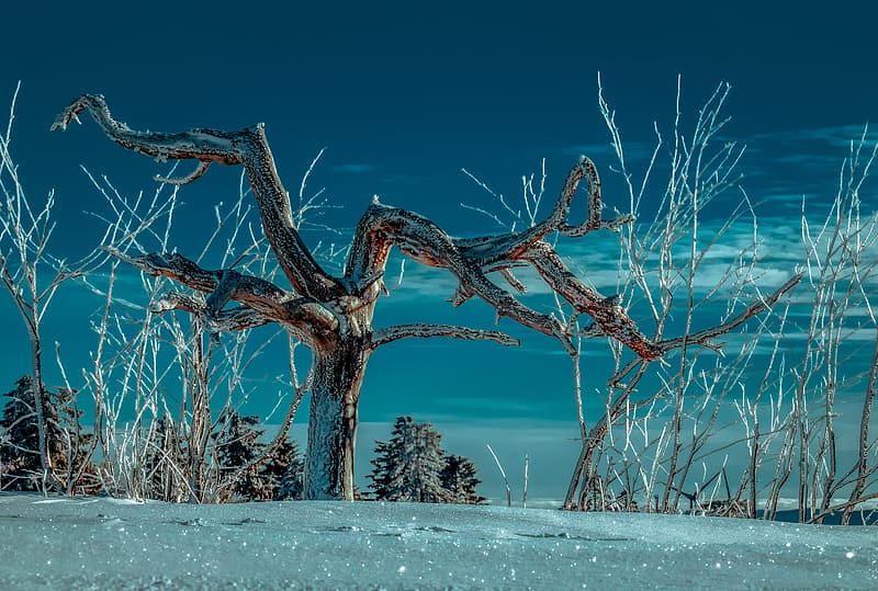 Brown bare tree on snow covered ground during daytime
