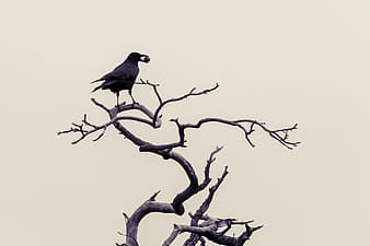 Silhouette of bird on top of bare tree
