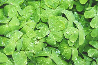 Close-up photography of green leaves with water drops