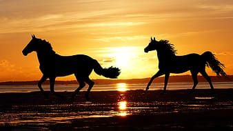 Silhouette of horse running on seashore during sunset