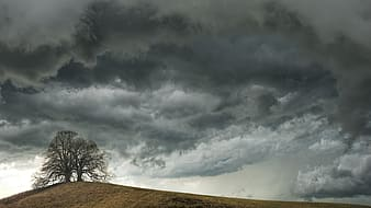 Leafless tree on brown field under gray clouds