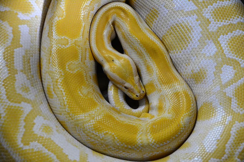 Yellow and white spotted snake