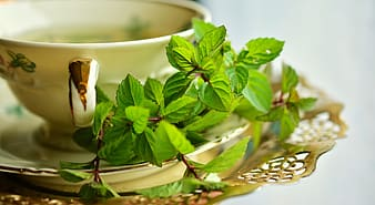 Green leaves on white plate