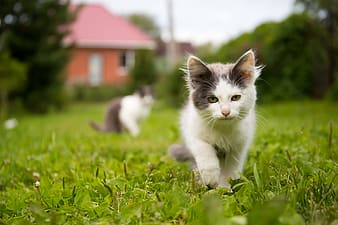 Selective focus photography of cat walking away from other cat