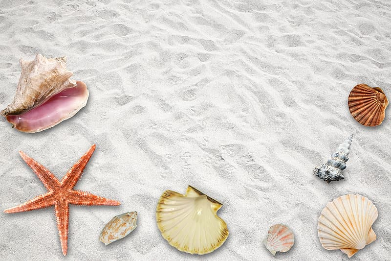Assorted sea shell on the white sand