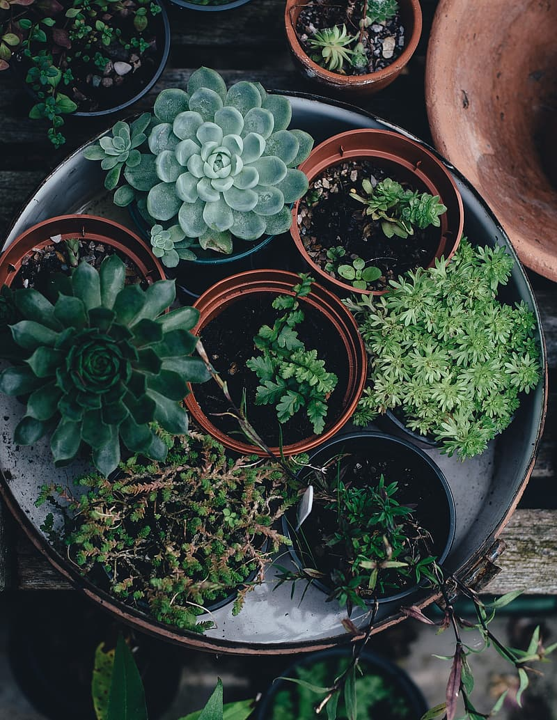 Green leaf plants with pots