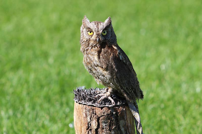 Selective focus photo of brown owl perching on brown trunk