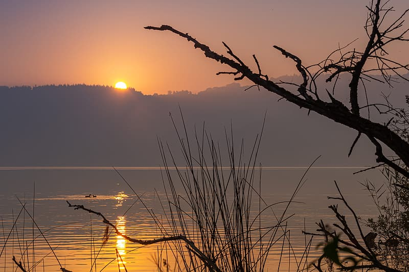 Silhouette of grass near body of water during sunset