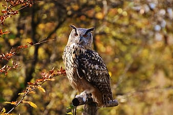 Brown owl standing on branch