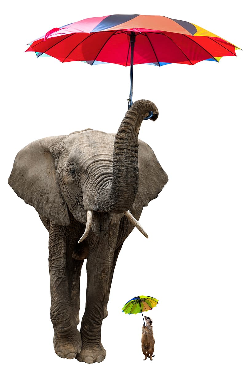 Elephant with red and yellow umbrella