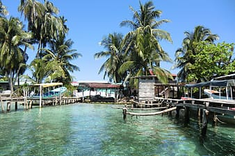 Docks on shallow water with coconut trees at daytime