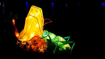 Grasshopper on yellow stone lighted decor