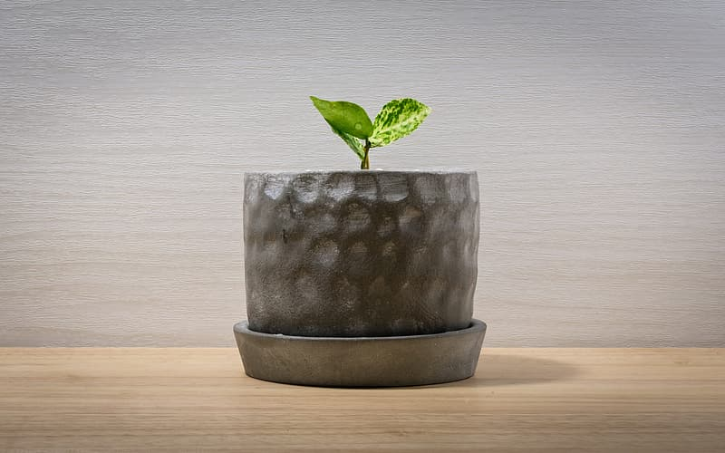 Photo of green leaf plant in pot