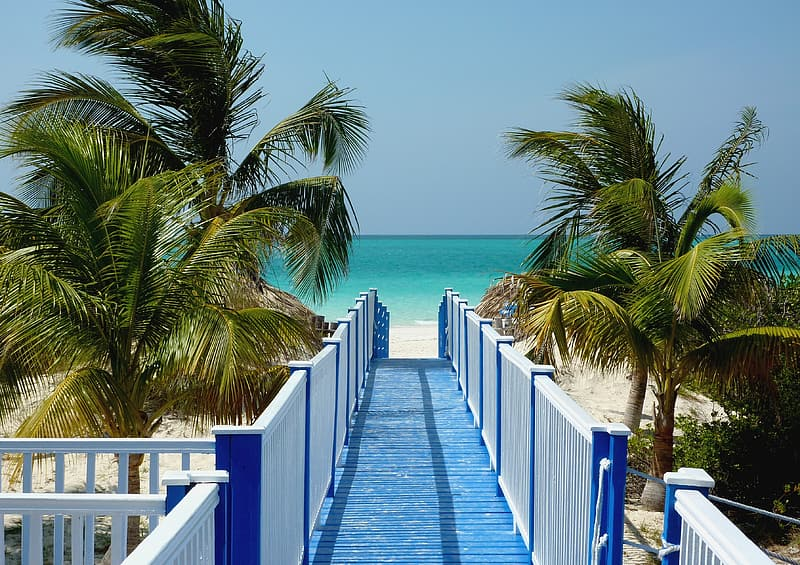 Blue and white wooden dock and coconut trees during daytime