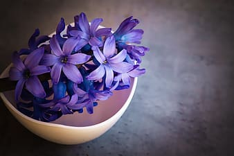 Shallow ficus photography of purple flower