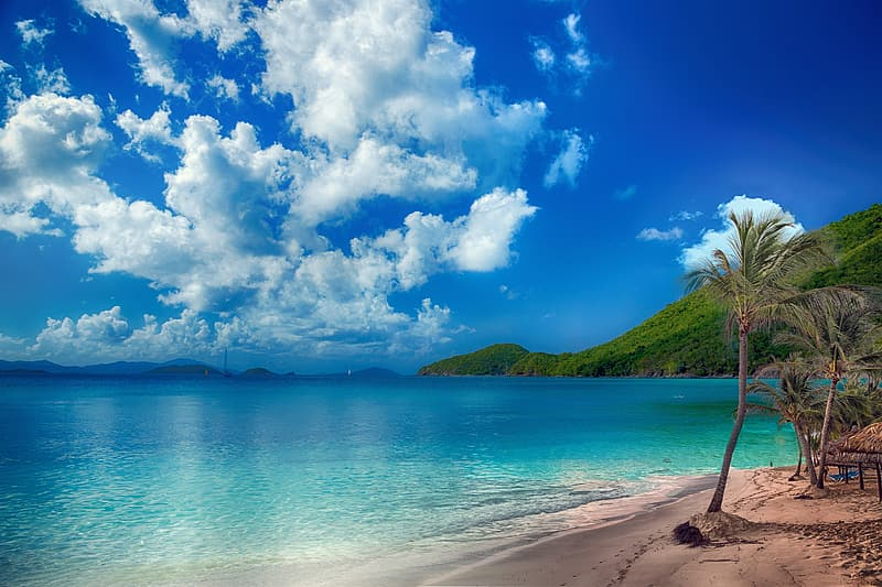 Green trees on seashore under blue sky and white clouds during daytime
