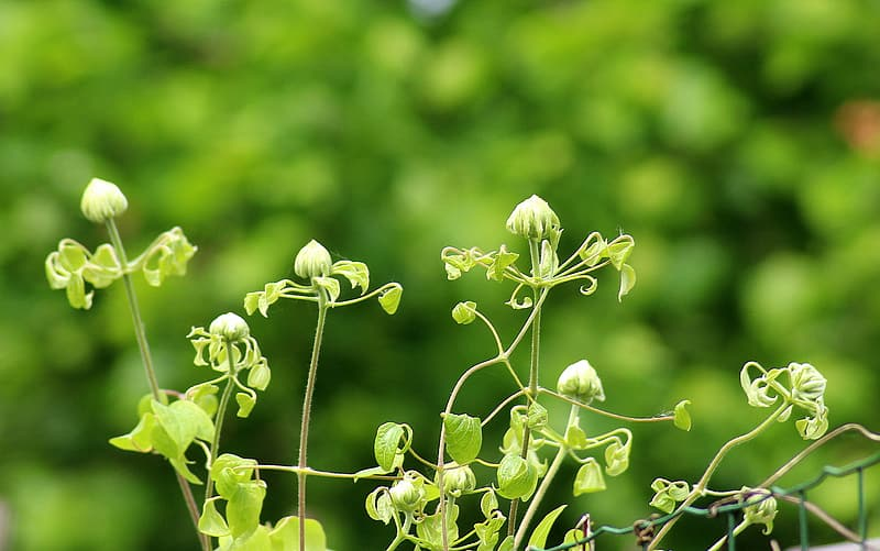 Depth of field photography of green leafed plant