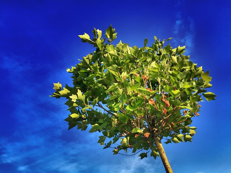 Green leafed tree under blue sky photography