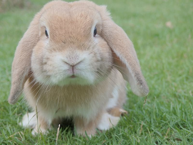 Selective focus photography of brown rabbit on green grass