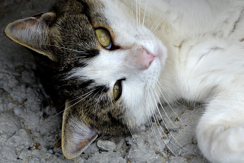 White cat lying on gray surface