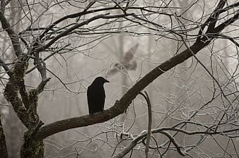 Silhouette photo of bird on wither tree