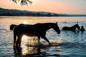 Brown horse running on water during daytime