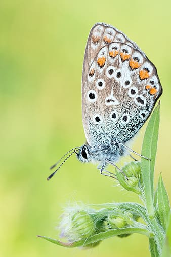Micro photography of butterfly perching on plant