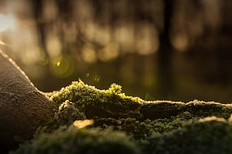Green moss on tree root