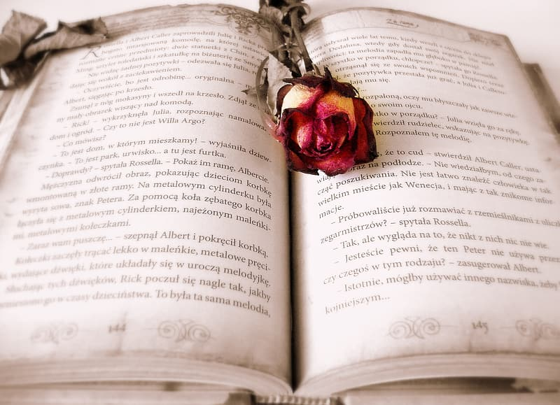Closeup photo of red rose on book
