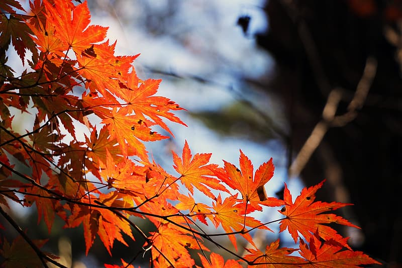 Orange leafed tree during daytime