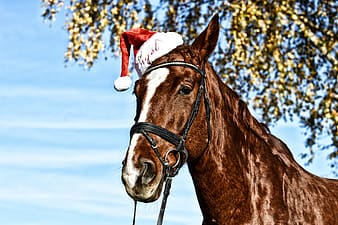 Brown horse with santa hat