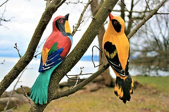 Red yellow and blue bird on tree branch