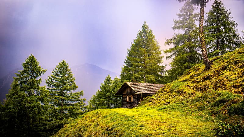 House on mountain surrounded by trees