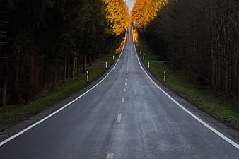 Long asphalt road with trees on side