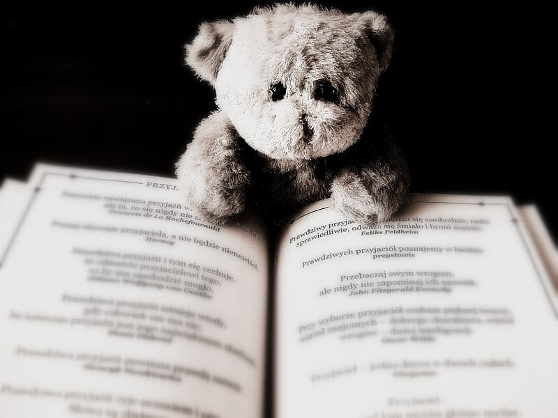 Brown teddy bear and notebook
