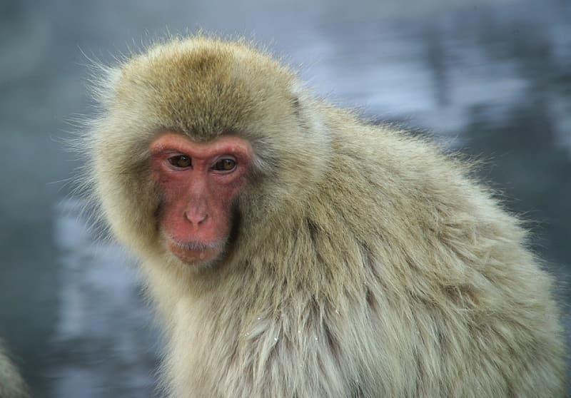 White and brown monkey in close up photography