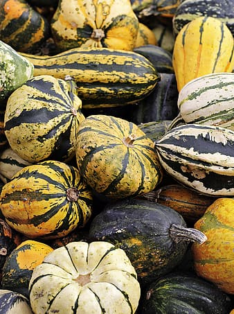 Green and yellow squash vegetable