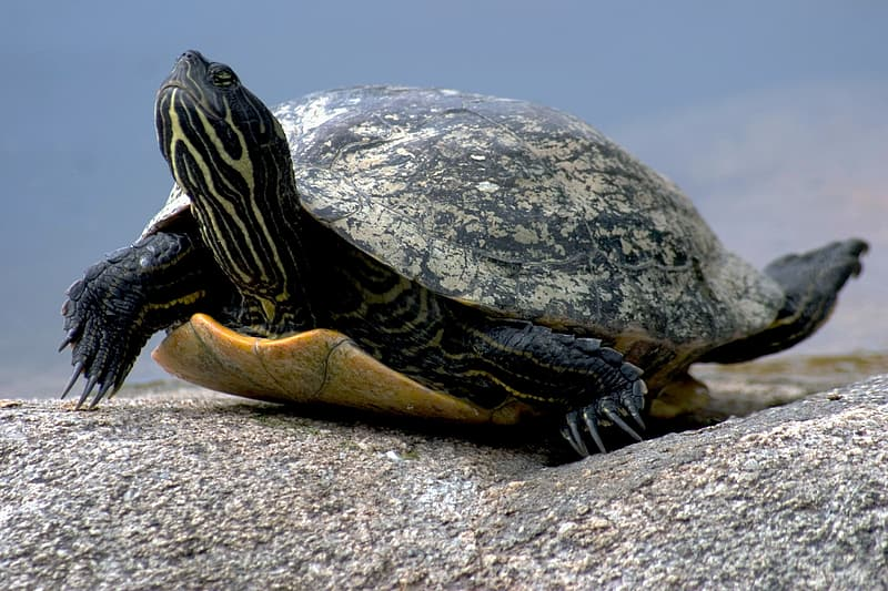 Black and brown turtle on brown sand