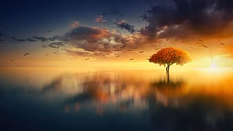 Tree on water during sunset