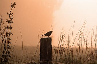 Silhouette of bird perched on wood post